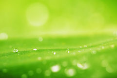 Baisses de l'eau et fond vert de texture de feuille Photo stock