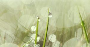 Baisses de l'eau sur l'herbe banque de vidéos