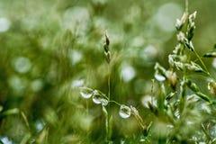 Baisses de l'eau sur l'herbe verte fraîche Photographie stock libre de droits
