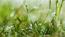 Baisses de l'eau sur l'herbe verte fraîche Photo libre de droits