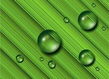 Baisses de l'eau sur l'herbe verte. Photos stock