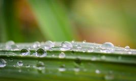 Baisses de l'eau sur l'herbe verte Photo libre de droits