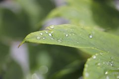 Baisses de l'eau sur la lame Photo libre de droits