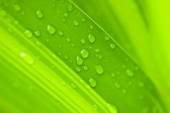 Baisses de l'eau sur la lame verte Images libres de droits
