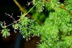 Baisses de l'eau sur la lame verte Rosée après pluie Fin vers le haut photographie stock