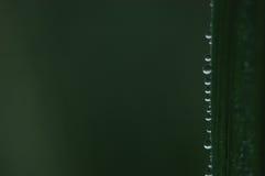 Baisses de l'eau sur le fond vert de lame Photo libre de droits