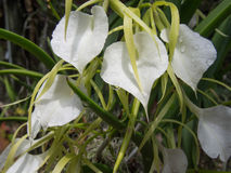 Baisses de l'eau sur les fleurs Images libres de droits