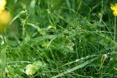 Baisses de l'eau sur une herbe Image stock