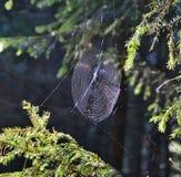 Baisses de l'eau sur une toile d'araignée Images libres de droits