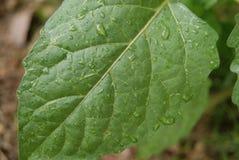 Baisses de lames et d'eau de vert Photo stock