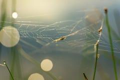 Baisses de matin de rosée en toile d'araignée Photographie stock libre de droits