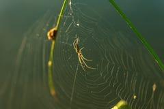 Baisses de matin de rosée en toile d'araignée Photo stock