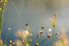 Baisses de matin de rosée en toile d'araignée Photos libres de droits