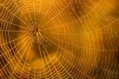Baisses de matin de rosée en toile d'araignée Toile d'araignée dans des baisses de rosée Belles couleurs en macro nature Photos stock