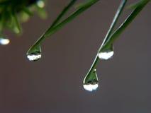 Baisses de pluie Photos stock