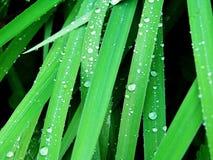 Baisses de pluie Images libres de droits