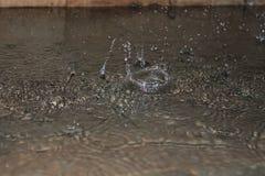 Baisses de pluie photo stock