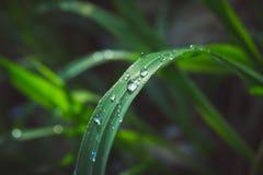 Baisses de pluie sur des feuilles Photos stock