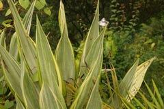 Baisses de pluie sur des feuilles Image libre de droits