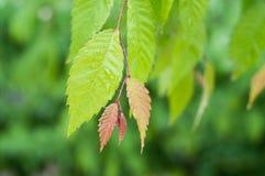 baisses de pluie sur des feuilles dans un jardin image libre de droits