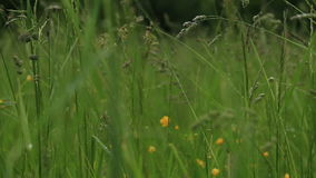 Baisses de pluie sur l'herbe banque de vidéos