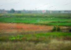 Baisses de pluie sur le verre de fenêtre humide Image libre de droits