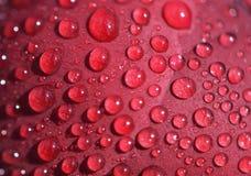 Baisses de pluie sur un pétale de pivoine image stock