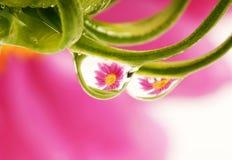 Baisses de rosée avec la réflexion Images stock