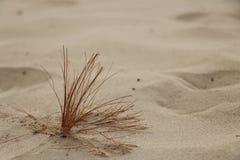 Baisses de rosée d'usine de désert Photographie stock