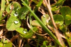 Baisses de rosée dans le macro d'herbe, foyer mou Images stock