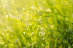 Baisses de rosée sur l'herbe Photographie stock
