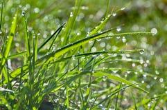 Baisses de rosée sur l'herbe Photographie stock libre de droits