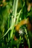 Baisses de rosée sur l'herbe verte Photo stock