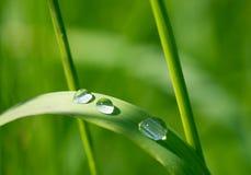 Baisses de rosée sur l'herbe verte dans la lumière du soleil Image libre de droits
