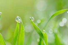 Baisses de rosée sur l'herbe verte Macro image stock