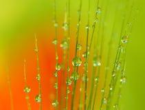 Baisses de rosée sur l'oreille du blé - instruction-macro image stock