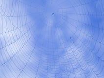 Baisses de rosée sur la toile d'araignée Photo stock