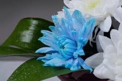 Baisses de rosée sur une fleur Photographie stock