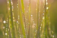 Baisses de rosée sur une herbe photographie stock libre de droits