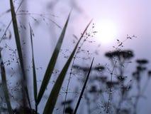Baisses de rosée sur une herbe images libres de droits