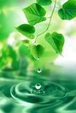 Baisses et feuilles de l'eau Images stock