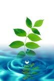 Baisses et feuilles de l'eau Photos stock