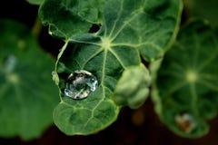 Baisses et feuilles en gros plan Photo libre de droits