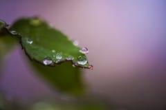 Baisses magiques de pluie Images stock