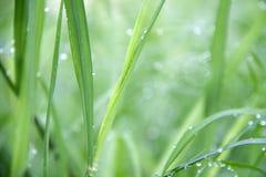 Baisses sur l'herbe verte après pluie Baisse de l'eau sur la prairie d'herbe photos stock