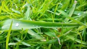 Baisses sur la feuille verte Photo libre de droits