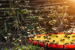 Bait bee spring. Food for bees. Apiculture. Stock Photography