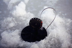 Bait for winter fishing Stock Image