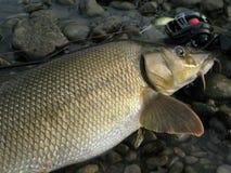 Baitcasting, das auf Fluss mit Köder fischt lizenzfreie stockfotos