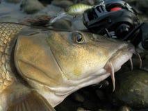 Baitcasting-Fischen in Mitteleuropa lizenzfreies stockfoto